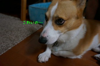 DSC01310.jpg