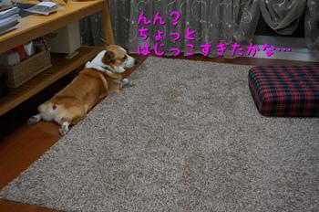 DSC01579.jpg