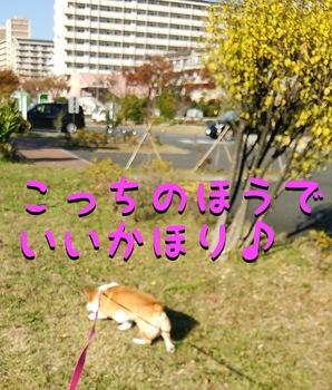 DSC_0808.jpg