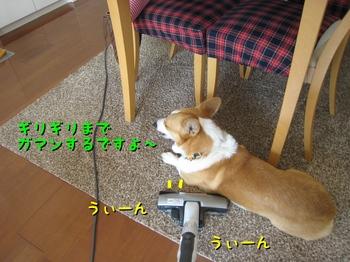 IMG_7241.jpg
