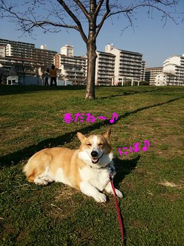 DSC_1556.jpg